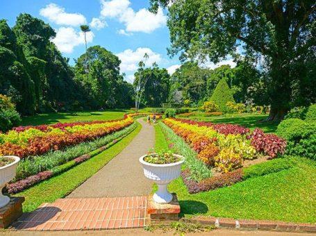 Royal Botanical Gardens (Peradeniya)