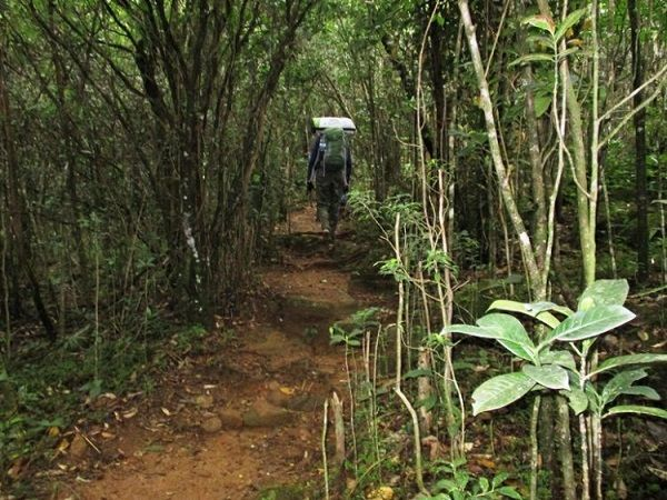 thick-mountain-forests-sri-lanka