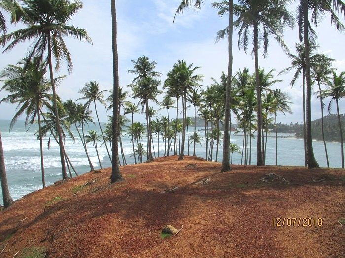 coconut tree spot of mirissa