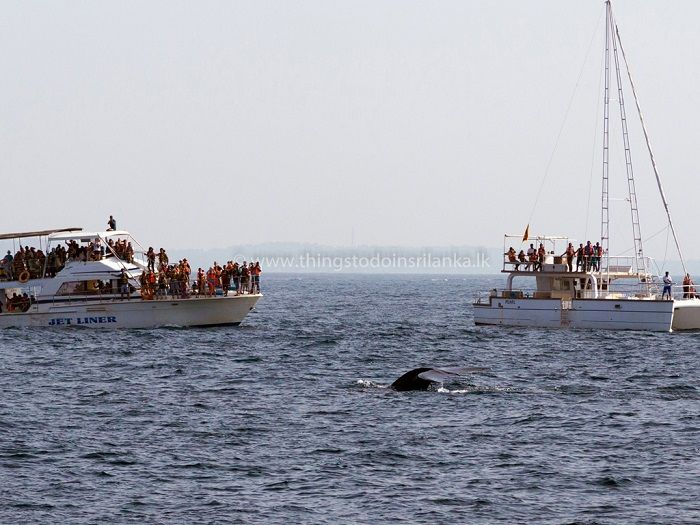 whale watching in mirissa sri lanka