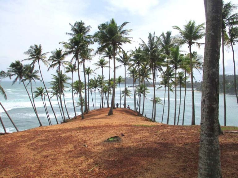 Coconut Tree Hill Mirissa