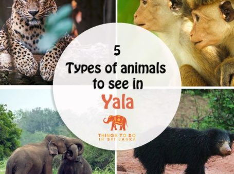 animals in yala national park