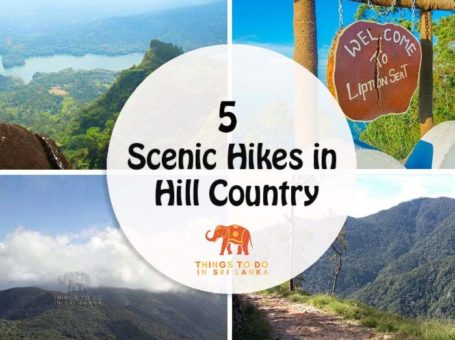 scenic hikes post banner