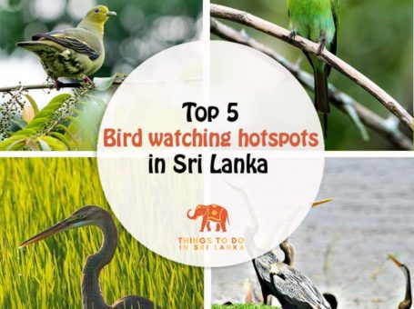 top bird watching palces in sri lanka