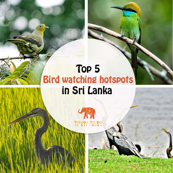 5 Bird Watching Hotspots in Sri Lanka