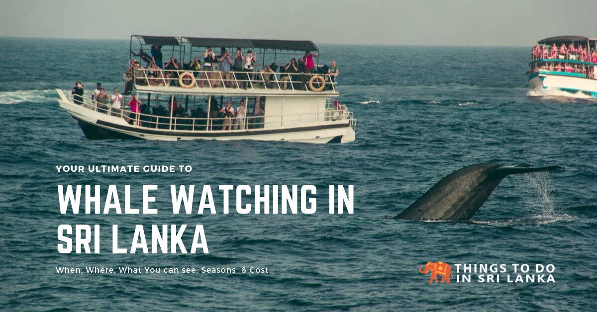Ultimate Guide to Whale Watching in Sri Lanka