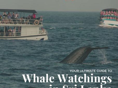 Whale Watchings in Sri Lanka