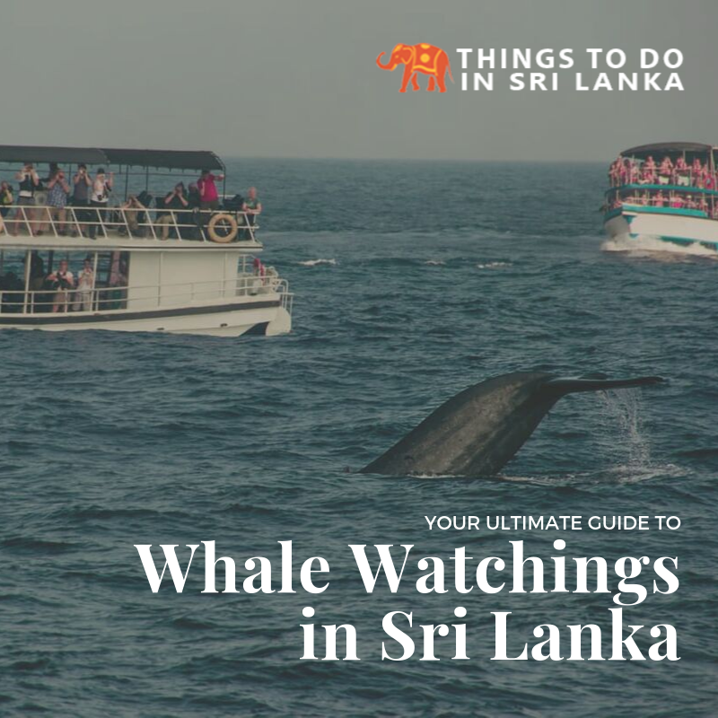 Whale Watchings in Sri Lanka