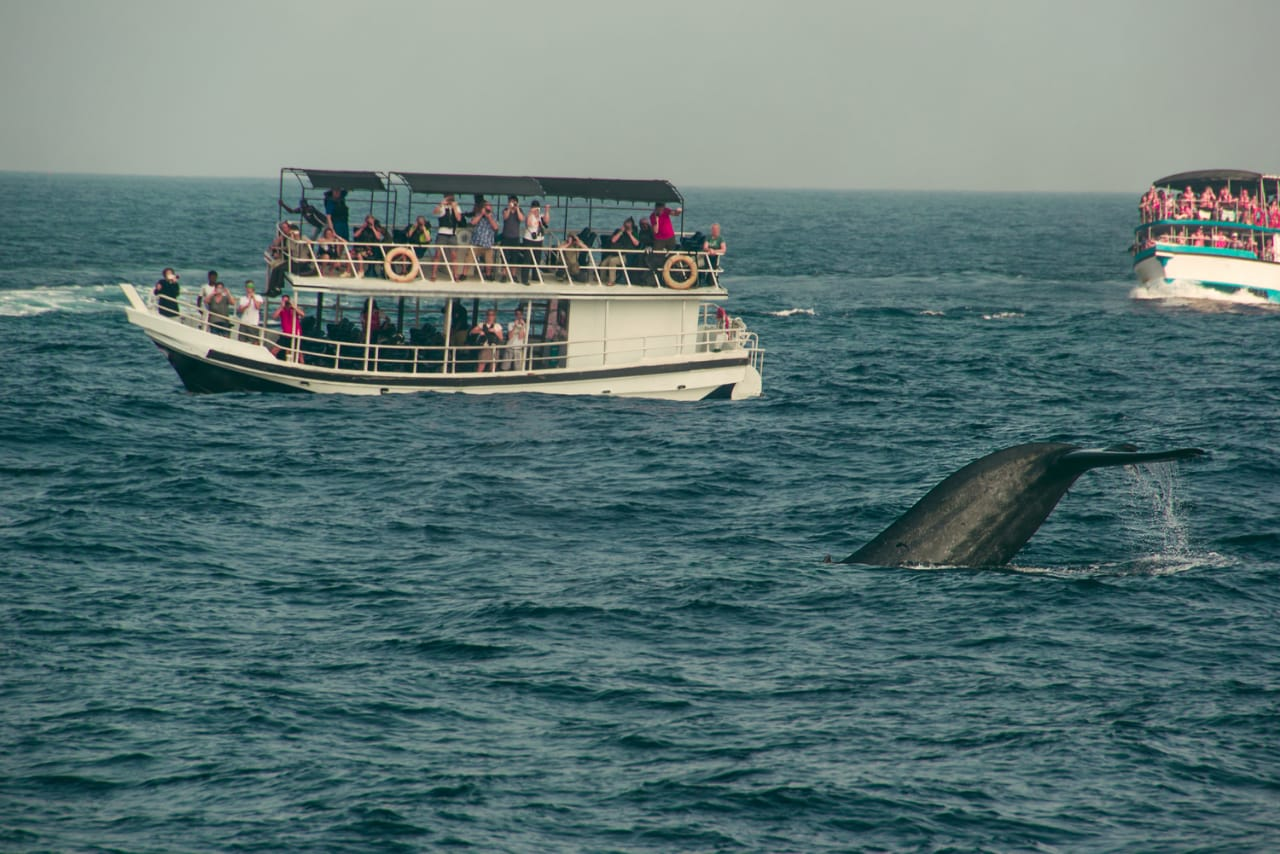 Whale Watching in Sri Lanka guide