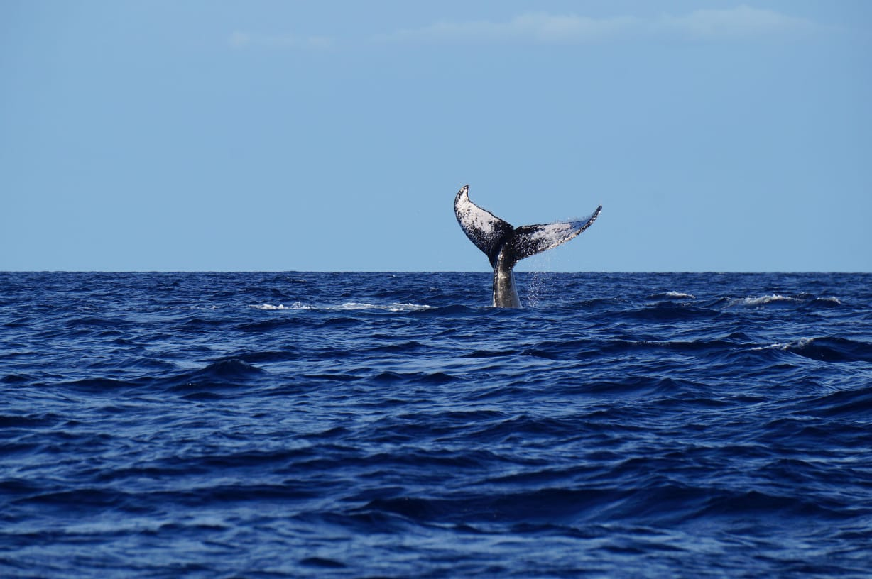 Whale watching tours in sri lanka