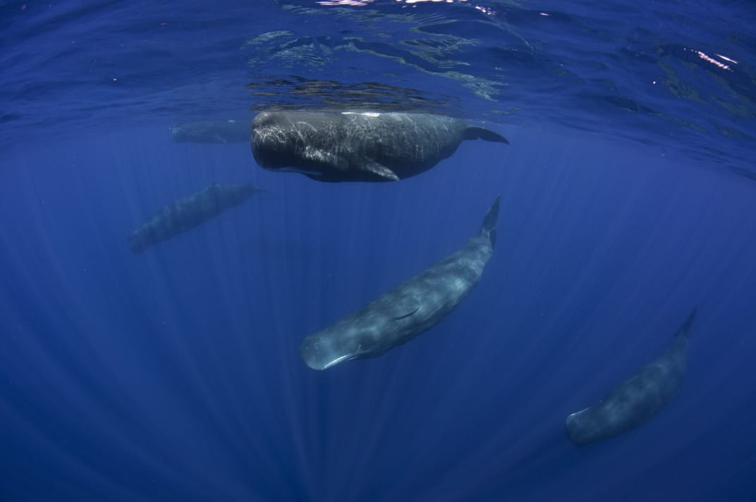 Dive with Whales in Sri Lanka