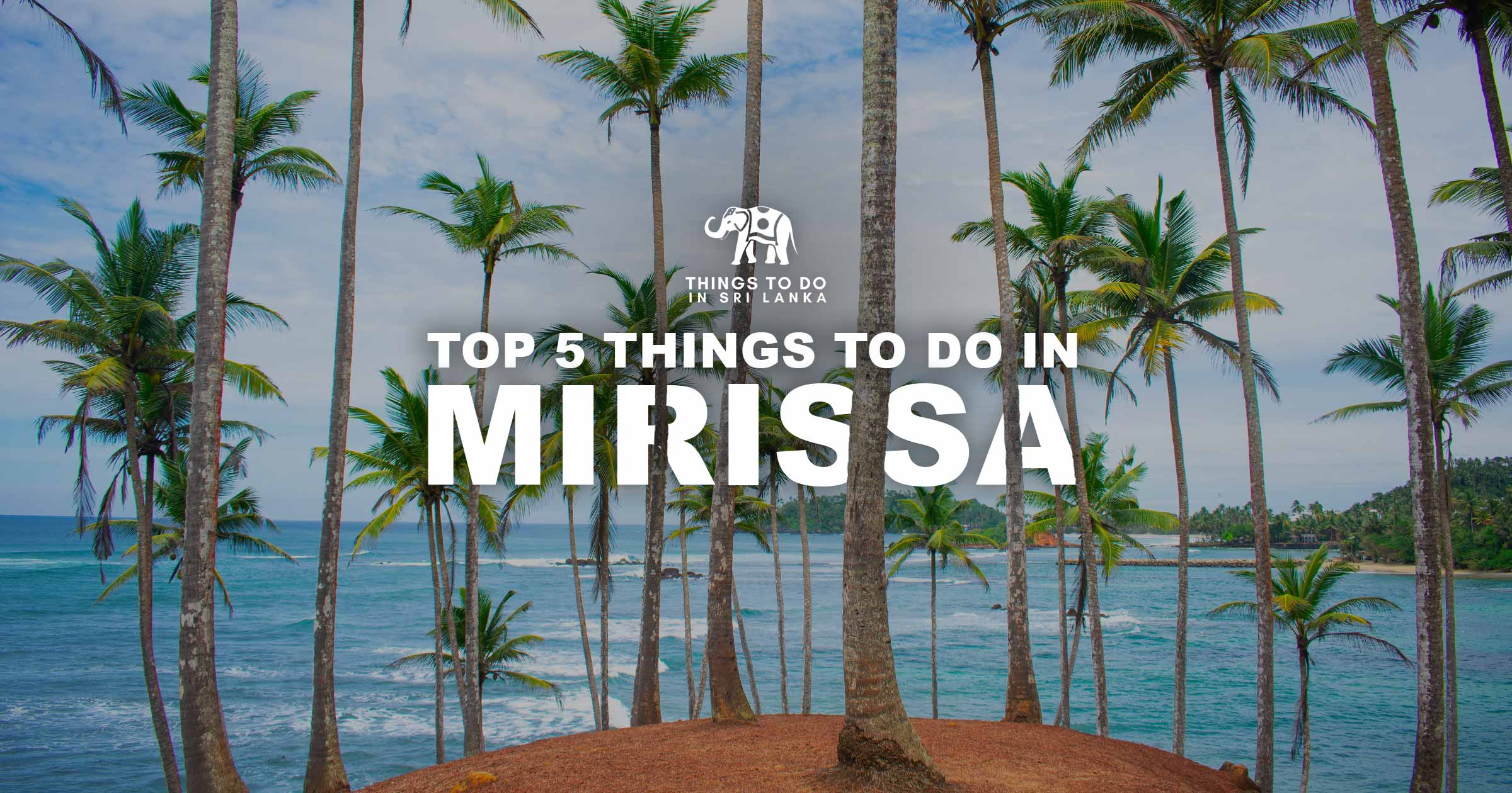 Top 5 things to do in Mirissa