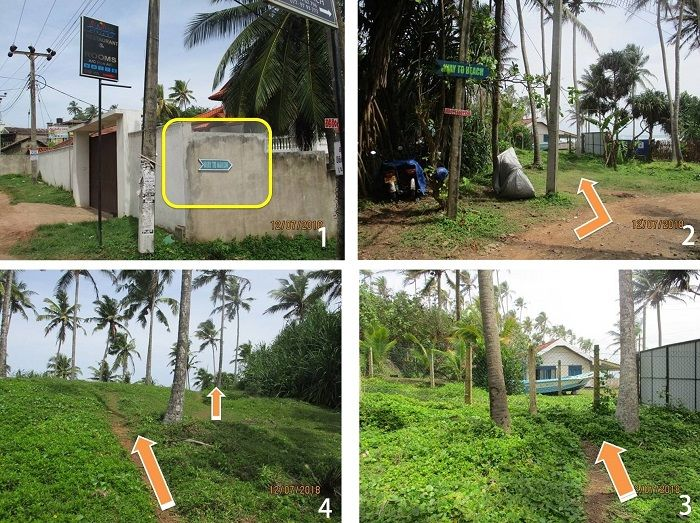 road to coconut tree spot smaller