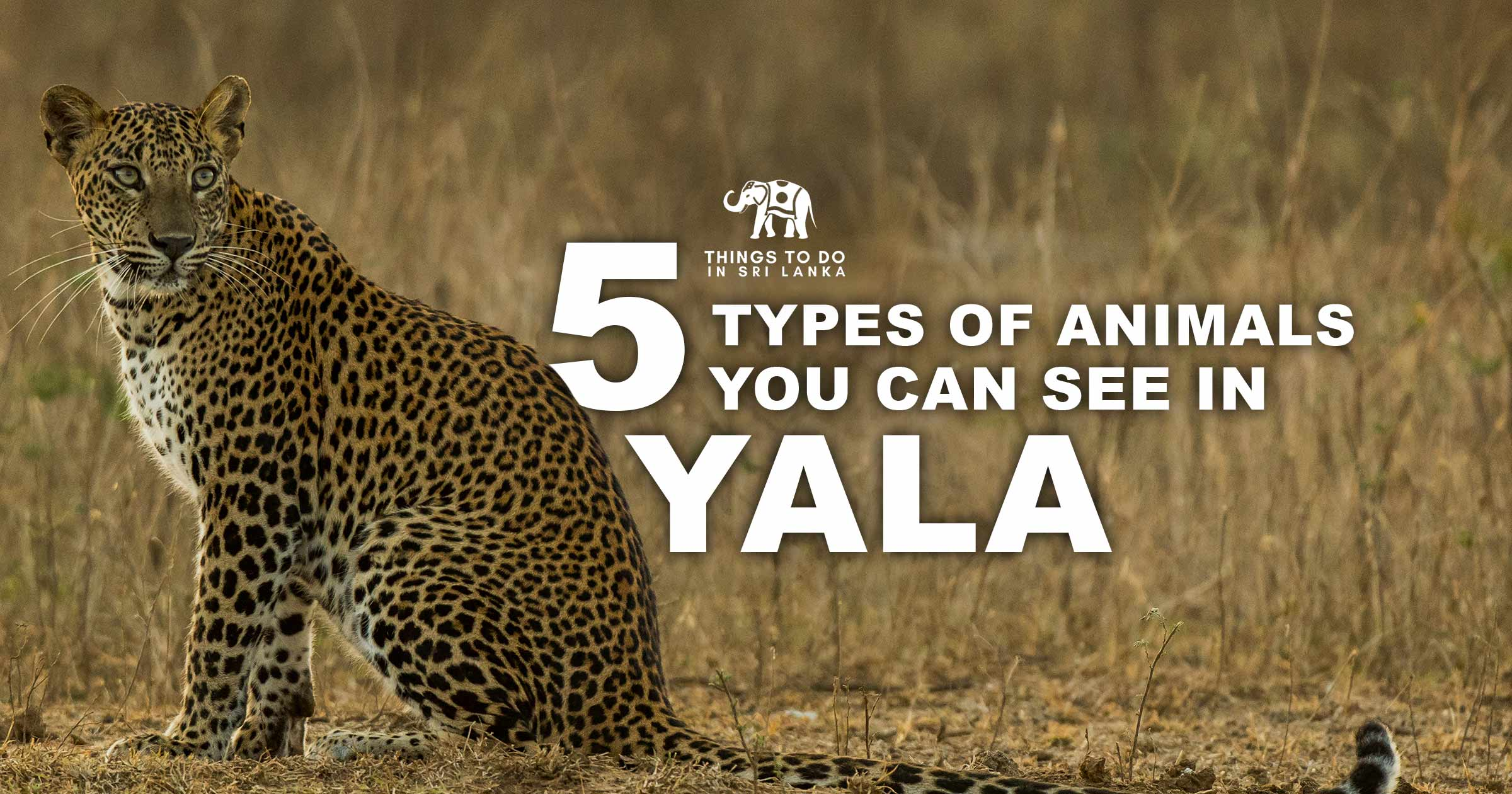 5 types of animals you can see in Yala