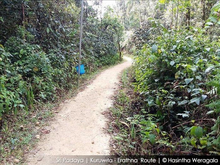 erathna road through the woods