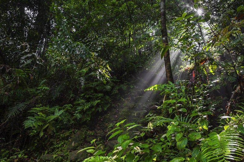 sinharaja primary rain forest
