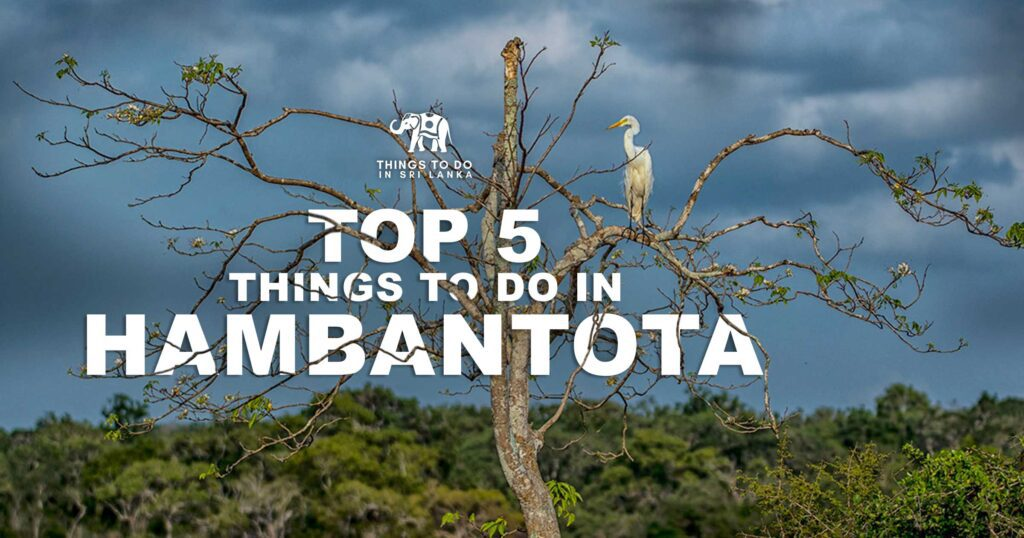 Things to do in Hambantota Sri Lanka