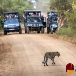 Dos and Don'ts When Visiting a National Park in Sri Lanka